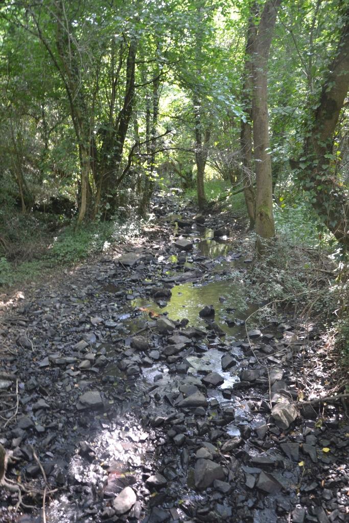Les nombreux ruisseaux
