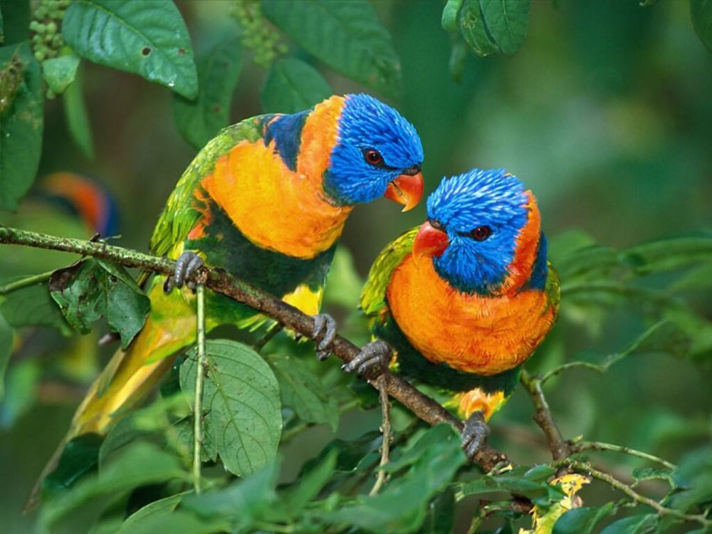 http://www.wallstock.fr/animaux/oiseau-de-paradis.jpg.php
