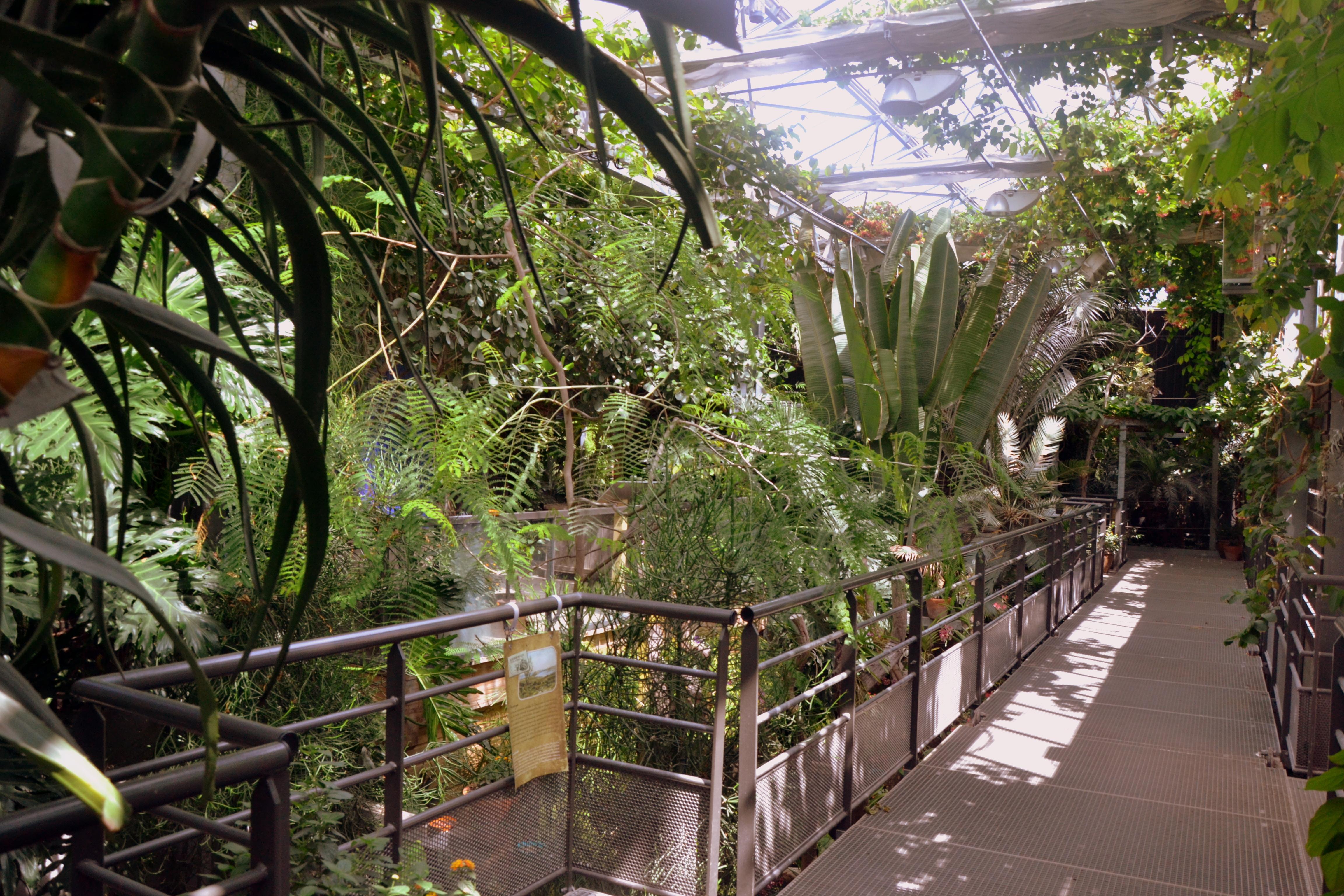 terra botanica  l u2019ambassadeur du v u00e9g u00e9tal    u2013 1001 patrimoines